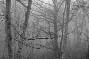 Photograph of woodland by Katja Hock
